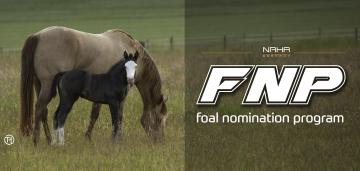 Nominierung Fohlenjahrgang 2021