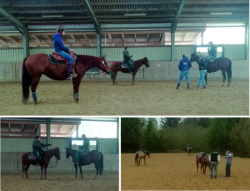 Reining-Kurs bei Train Station Reining Horses mit Markus Gebert